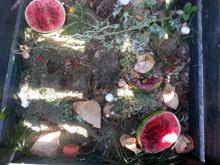 Kompostieren Tipps und Tricks