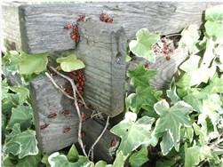 Kompost umsetzen