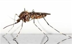 Mückenstecker in der Wohung