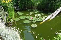 Teichpumpe Gartenteich